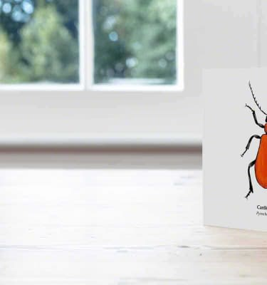 Hand Illustrated Cardinal Beetle Card