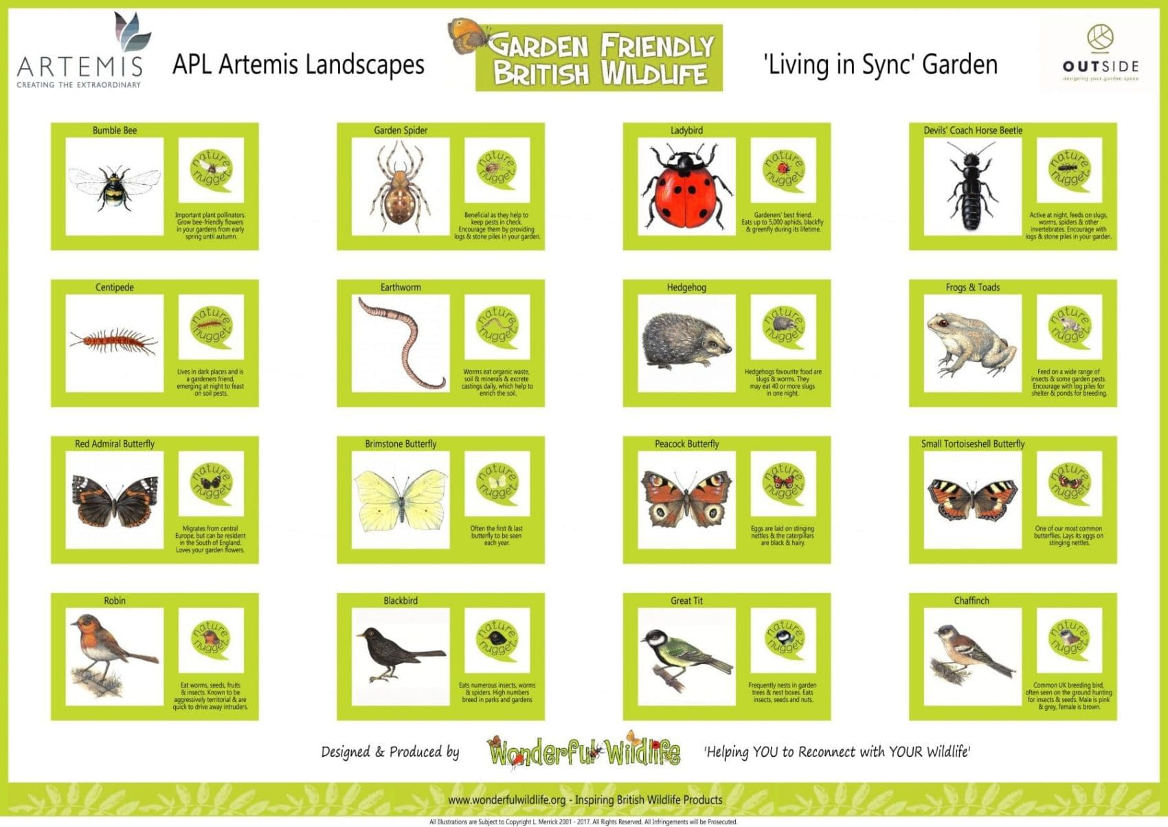 download our Garden-Friendly-Wildlife-Life-Board-for-Gardeners World 2017