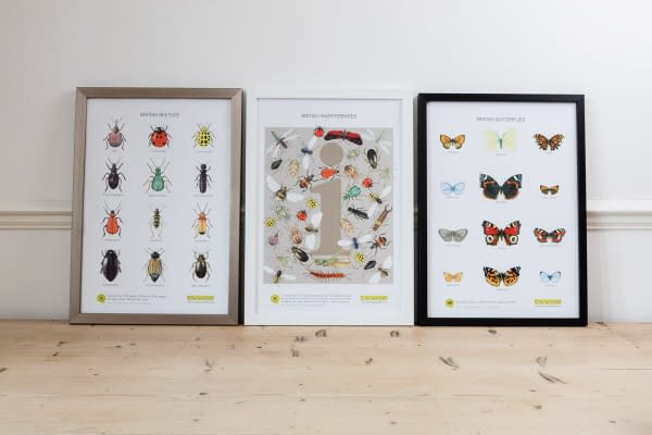 Unframed Posters of British Wildlife