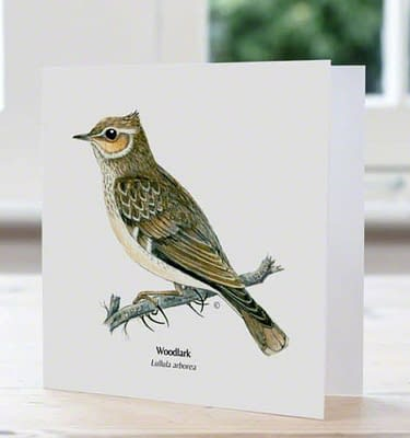 Woodlark, British bird, card