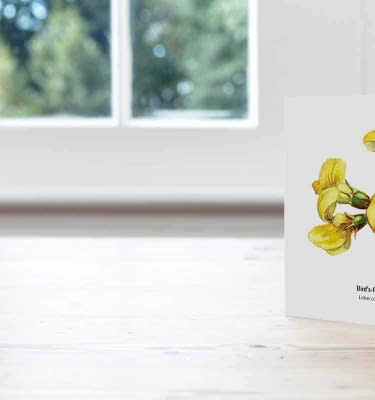 Hand Illustrated card, Birdsfoot Trefoil Card