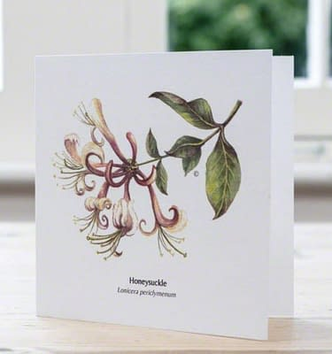 Honeysuckle, card