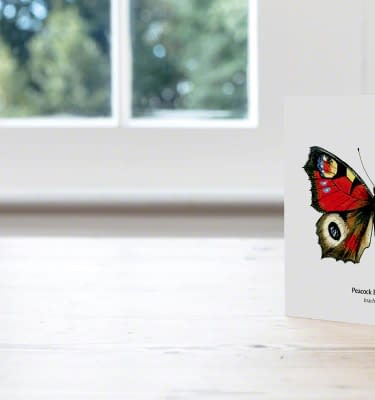 Hand Illustrated Peacock Butterfly Card