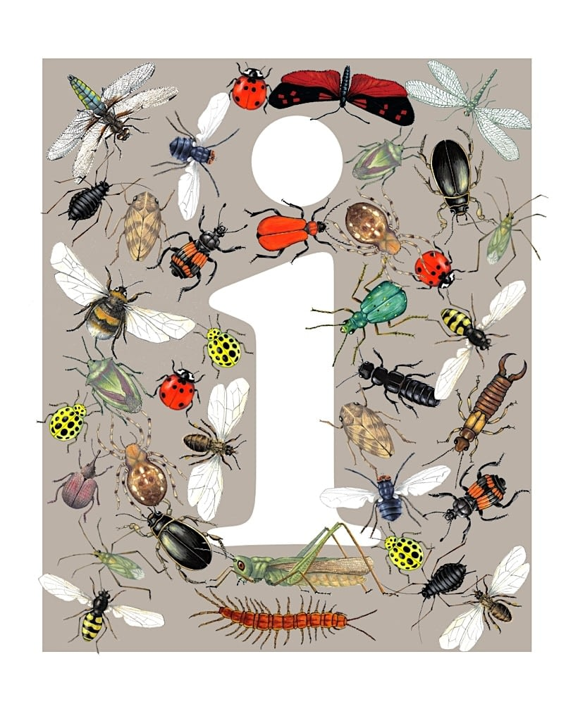 Illustrated letter i white on insect grey back