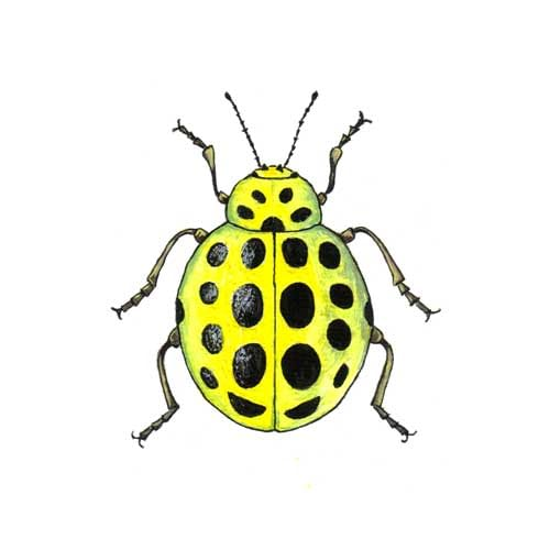 Ladybird Yellow illustration for product design